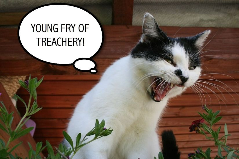 YOUNG FRY OF TREACHERY