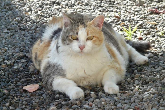 lucky-cat-1196761_1920.jpg